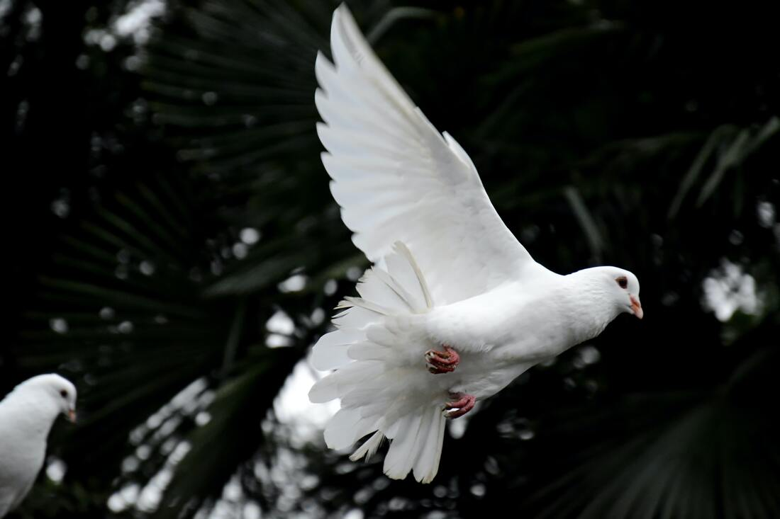 Conviction of the Holy Spirit